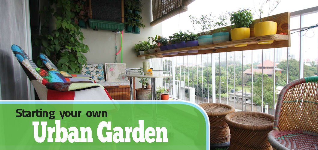 Starting your Own Urban Garden